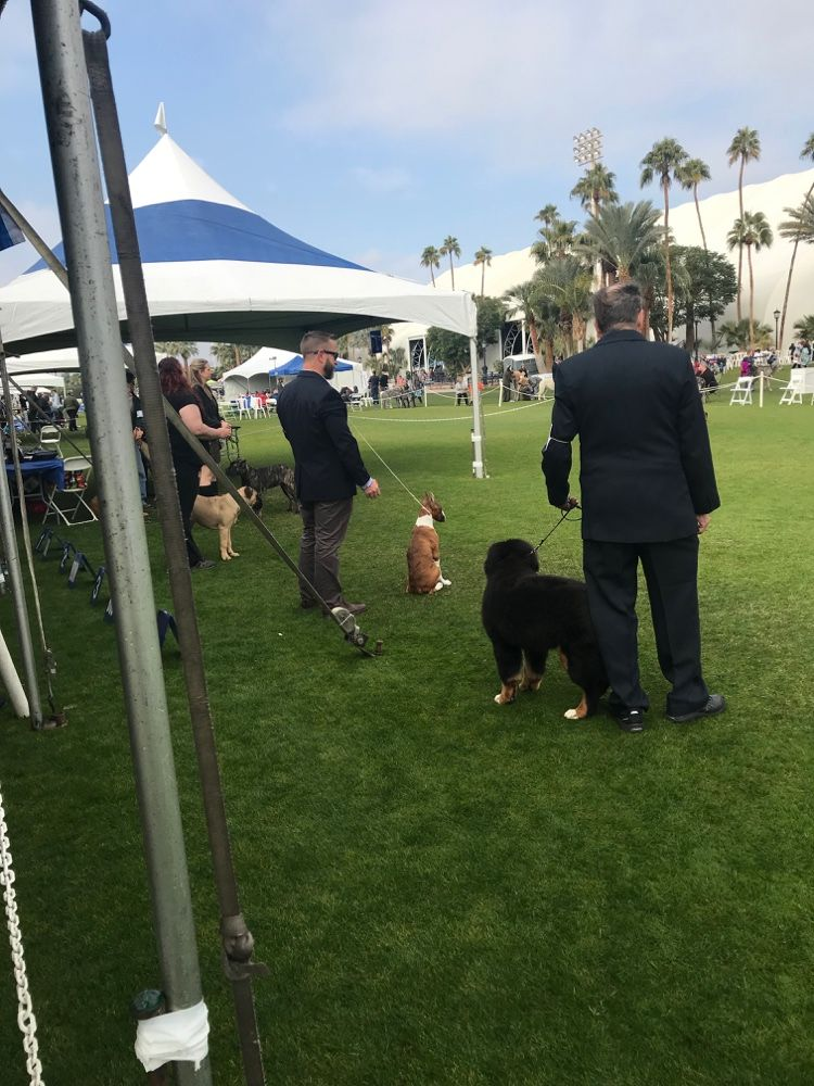 Various Competitors Observing Judging At The Akc All Breed Show