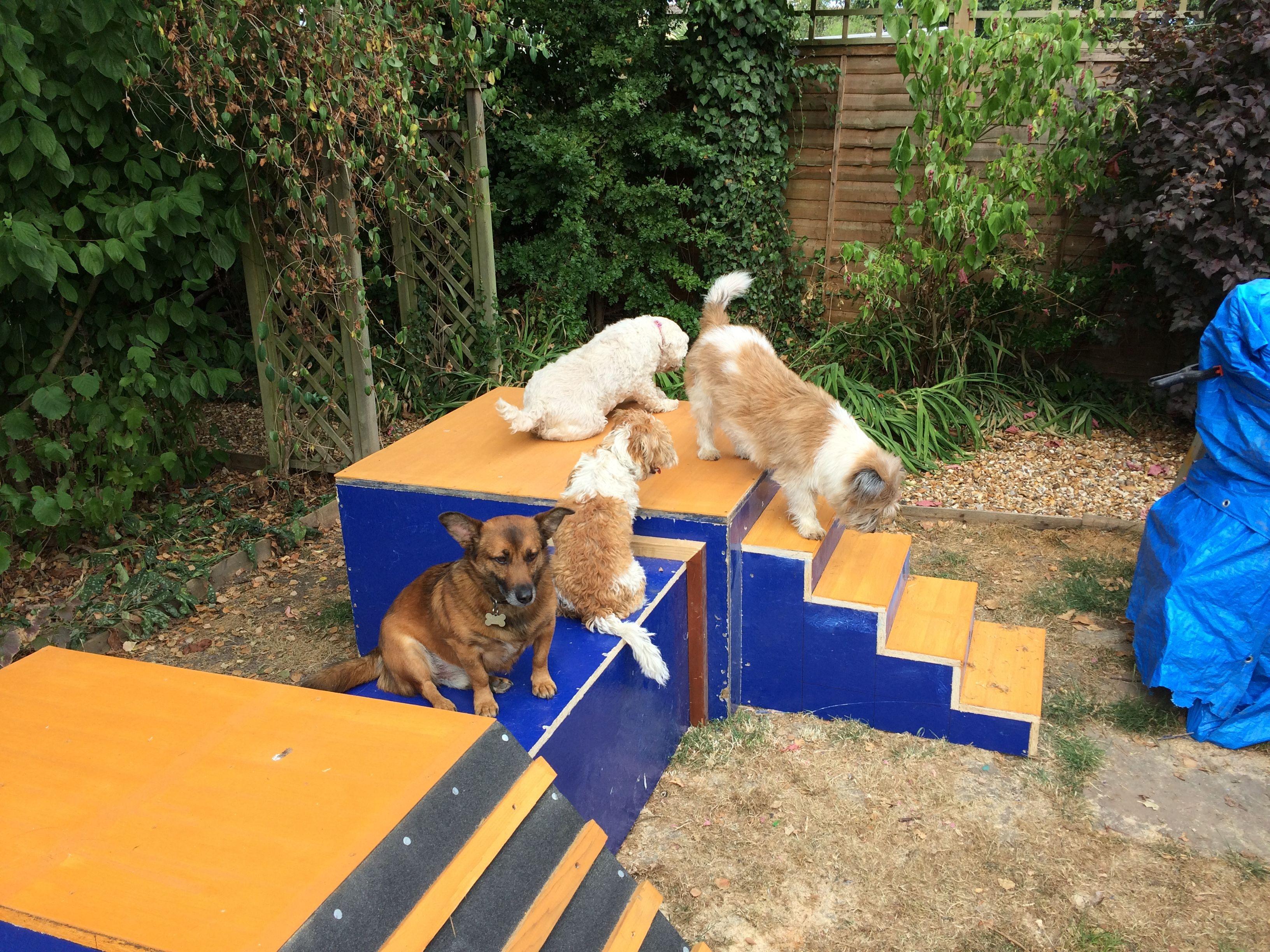Our Diy Dog Playground Dog Playground Dog Training Obedience Diy Dog Stuff Diy backyard dog playground