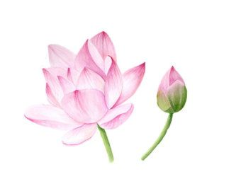 Lotus Blossom Watercolor Painting Tattoo Inspiration Watercolor