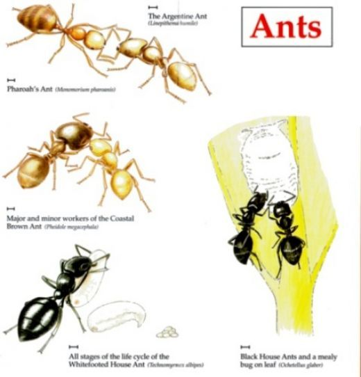 Amazing How To Get Rid Of Ants