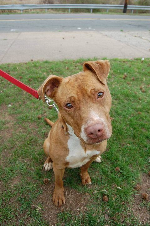 New Haven Ct Animal Shelter Flower Adopted Animal Shelter