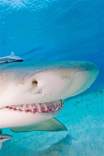 Imagem: 'Sorridentes', eles surpreenderam os fotógrafos (© Image Source/Getty Images)