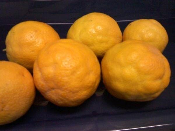 ごつごつオレンジ 2014年米国ロス