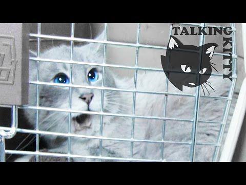 Talking Kitty Cat 34 Save Gibson Youtube I Love The Talking Kitties Cat Talk Cats Pretty Cats