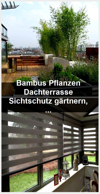 Bambus Pflanzen Dachterrasse Sichtschutz gärtnern, Bambus