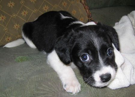 The Most Adorable Dog Mixes In The World 12 Pictures 1 Puppy Dog Pictures Collie Mix Dog Mixes