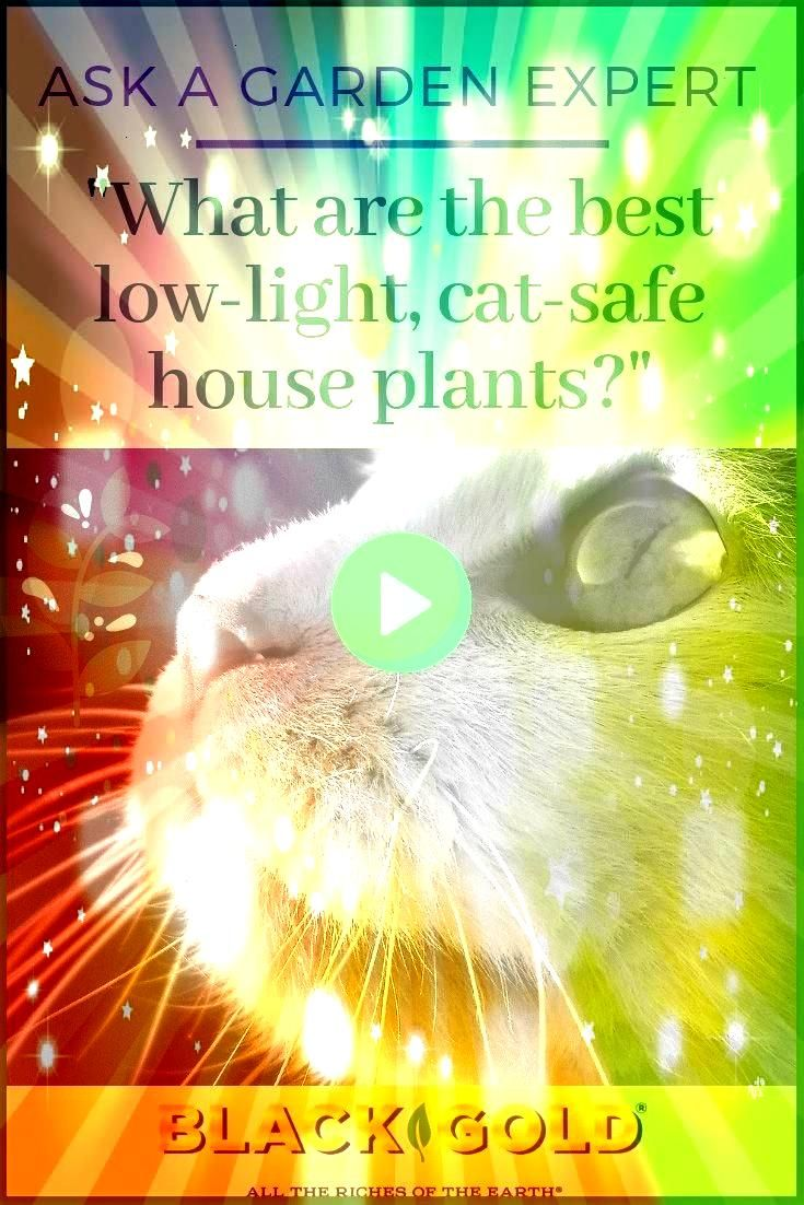 LowLight House Plants Question What are the best lowlight house plants that are cat safe Question from Margaret of Houston Texas Answer Each of these eight beautiful hous...