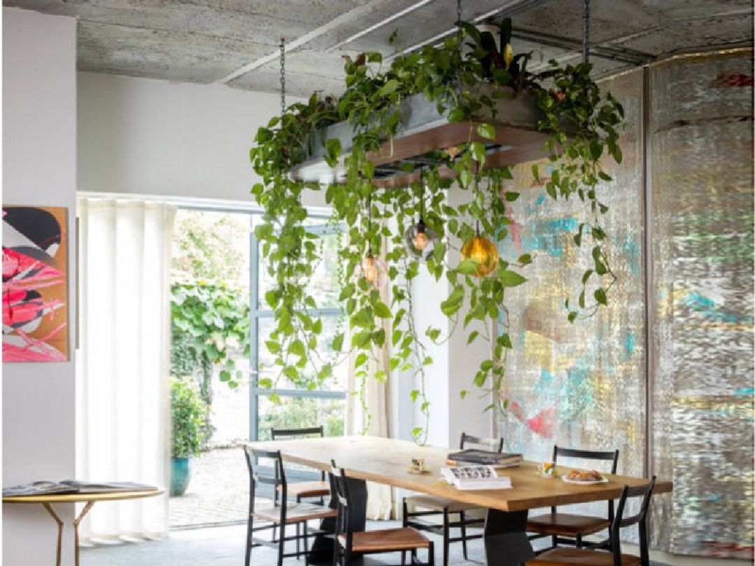 6 A Comfortable And Fresh Dining Table Hanging Plants Indoor