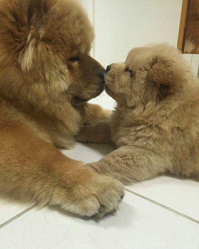 Baby Doggos Fluffy Animals Puppies Baby Dogs
