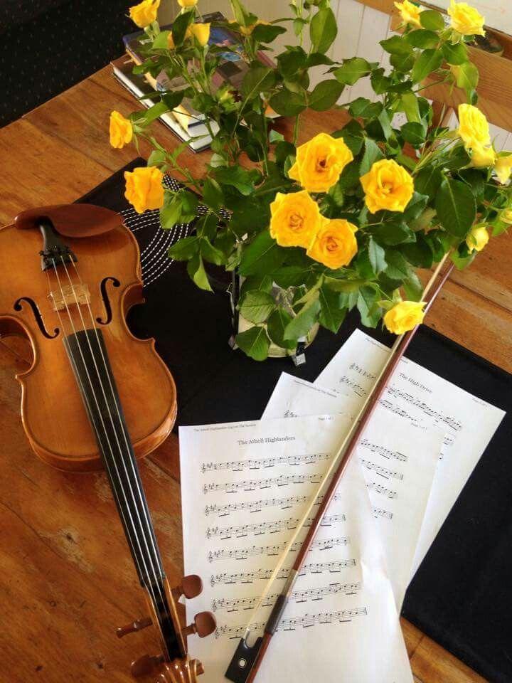 Amy Tham's violin