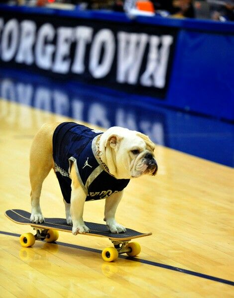 Jack The Bulldog Doing His Skateboarding Thing Bulldog English Bulldog Skateboard