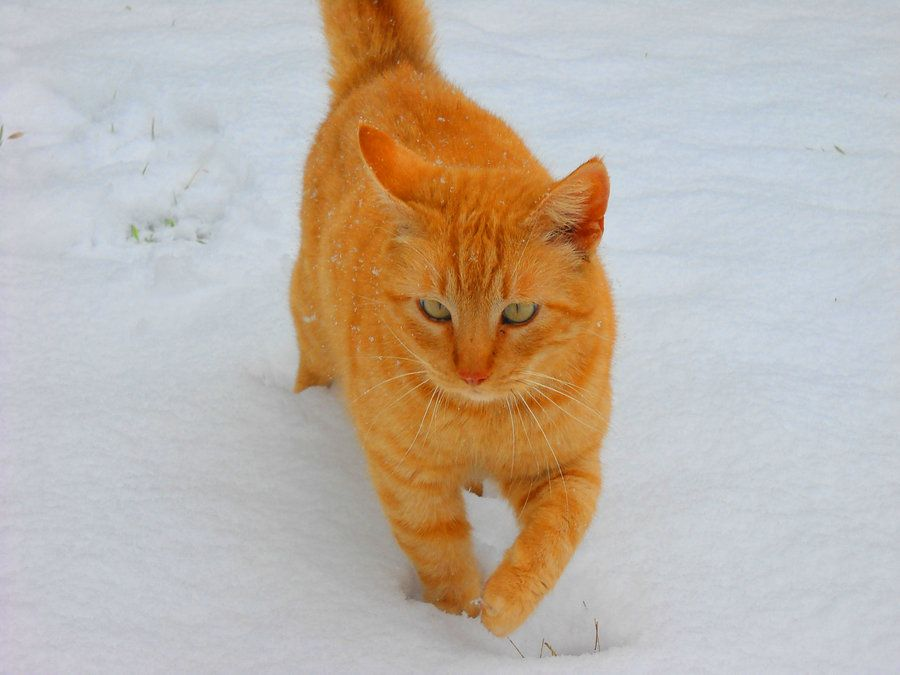 Its Cold by TayaTaske.deviantart.com on @deviantART