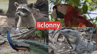 liclonny Tutoriales: AMOR Y CUIDADO PARA LOS ANIMALES