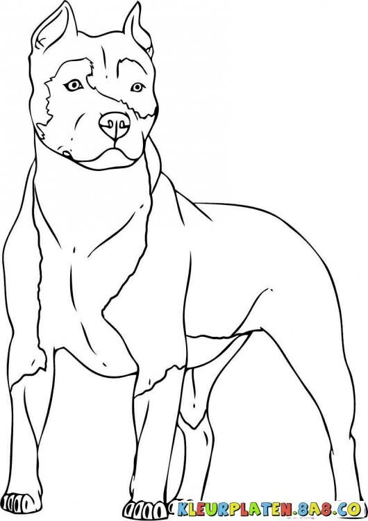 Pitbull Shrink Art Fun Dog Coloring Page Pitbull Drawing Drawings