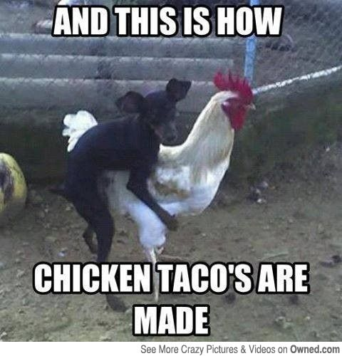 How chicken taco's are made