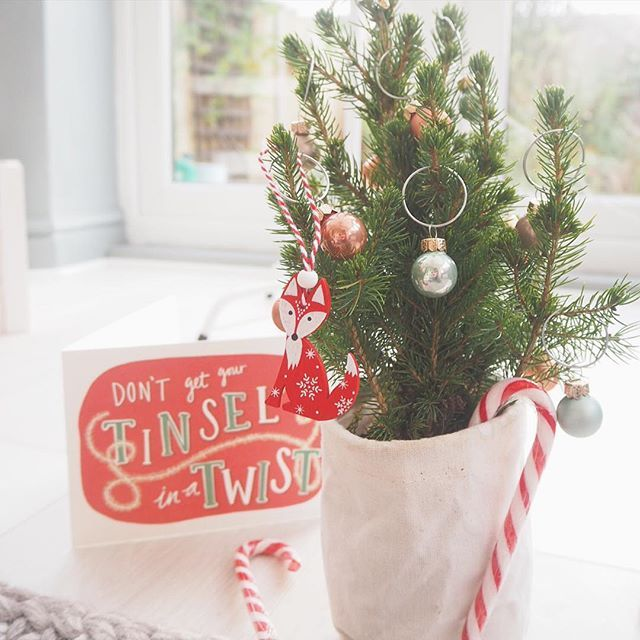 How cute is my mini #Christmas tree from #bloomandwild? such a great