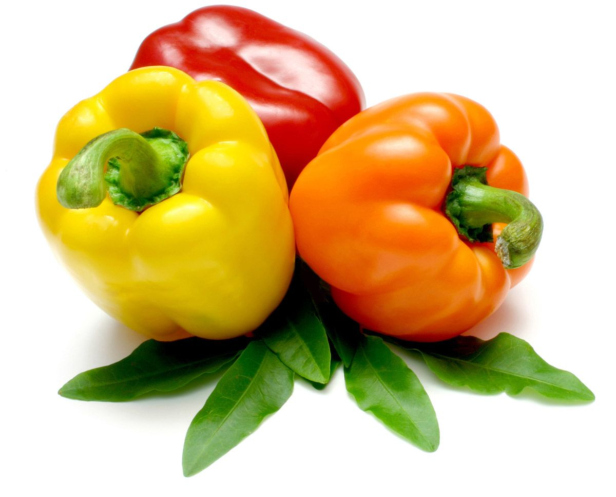 sweet pepper capsicum annuum heritage garden peppers pinterest capsicum annuum pepper. Black Bedroom Furniture Sets. Home Design Ideas