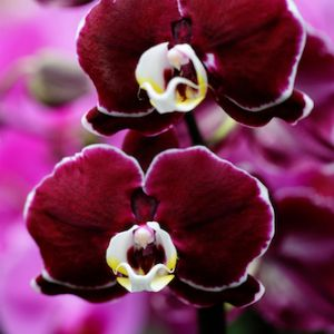 Did you recently receive an #orchid as a gift? Check out our simple care tips to keep your plant blooming for months!