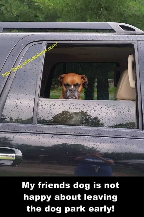 Facebook Twitter Google Pinterest Stumbleupon Dog Snapchats