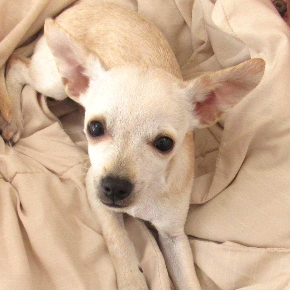 Dog Adoption San Diego Adopt A Dog Helen Woodward Animal Center Puppy Adoption