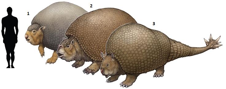 1. Panochthus frenzelianus 2. Glyptodon elongatus 3. Doedicurus clavicaudatus