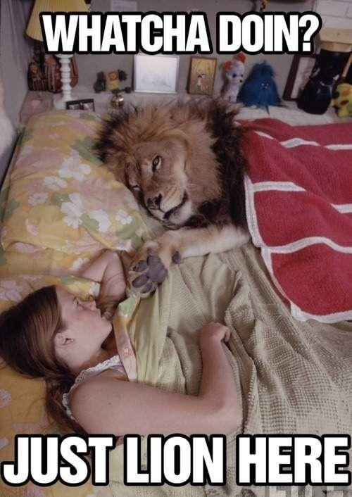 Hi lion!