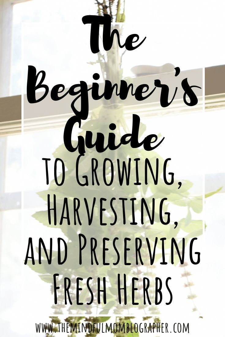 an excess amount of herbs from your garden of leftover from the farmers marketstore Ever want to learn how to grow herbs for tea cooking tinctures and cleaning recipes No...