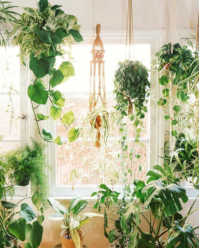 9 Beginner Friendly Indoor Hanging Plants