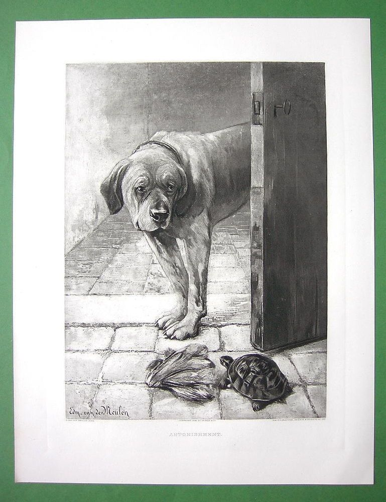 MASTIFF DOG Surprised by Turtle - 1893 Victorian Era Antique Print #Vintage