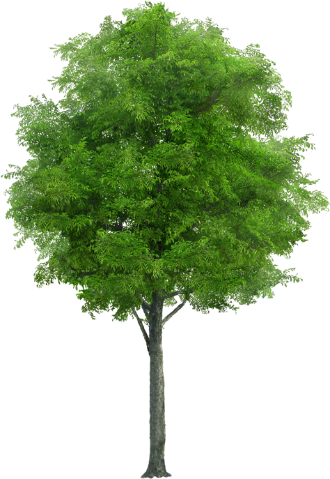 Pin By Hn On Derevya Tree Photoshop Tree Images Garden Illustration