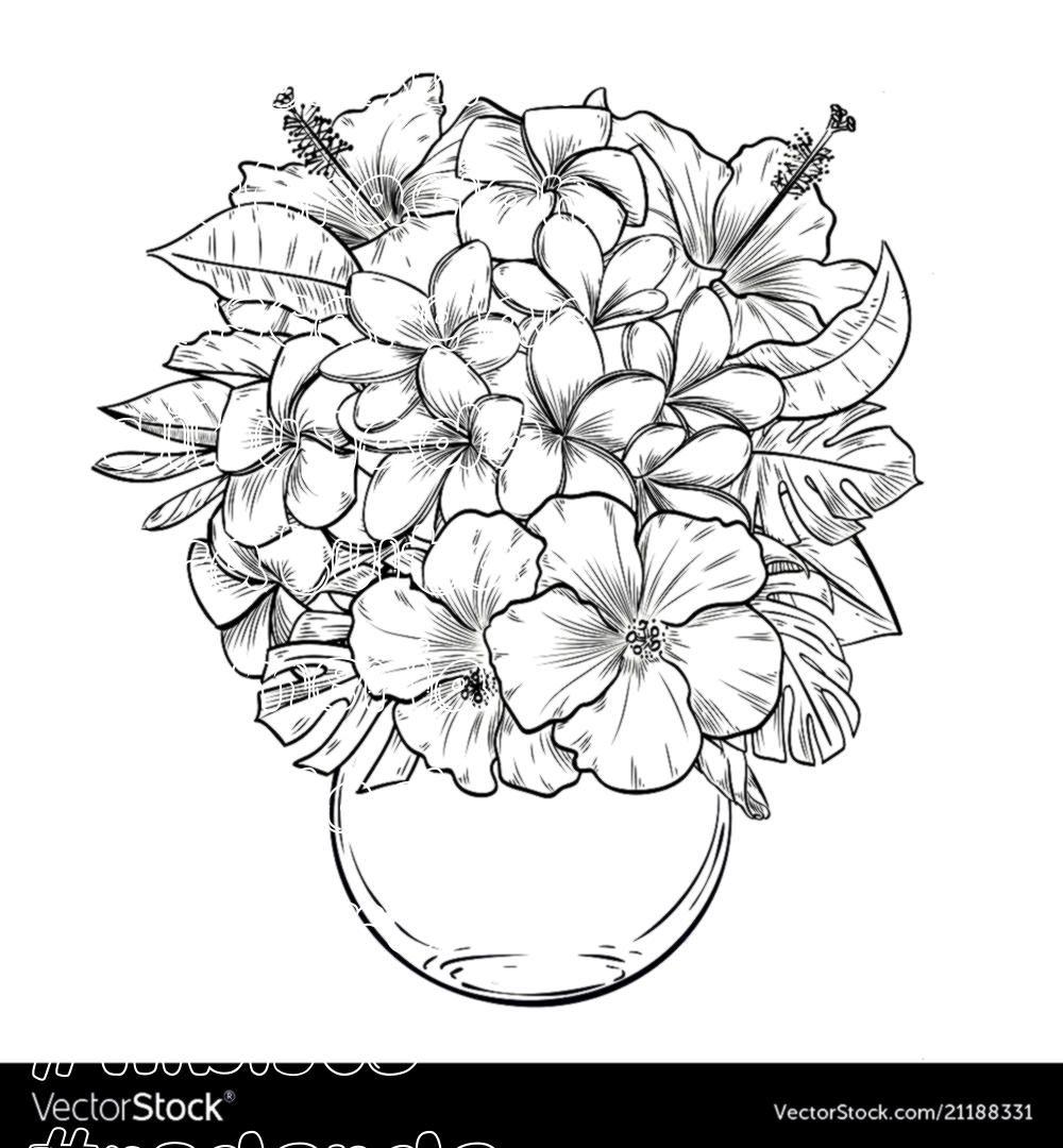 Ilustracion Ilustracion Descargar Dibujado Gratuita Plumeria
