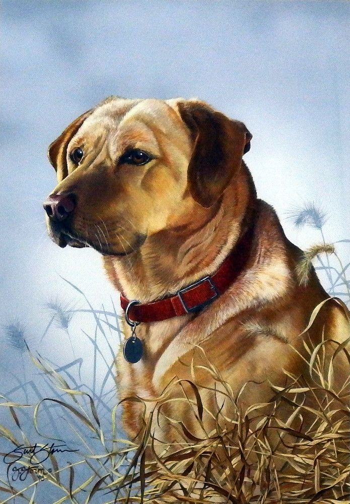 Scot Storm Master's Pride Yellow Lab Dogs, Easiest dogs