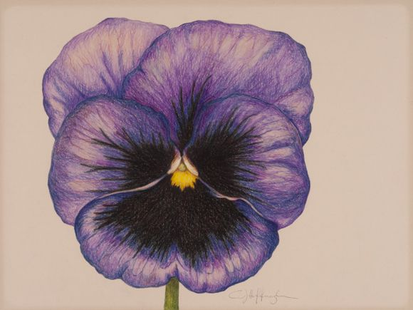 pansy flower drawing - photo #7