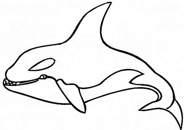 coloring page shark killer whale