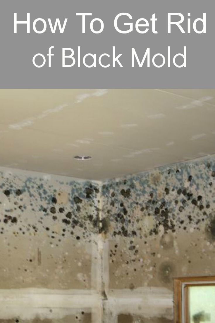 How To Get Rid Of Black Mold Mold In Bathroom Clean Black Mold
