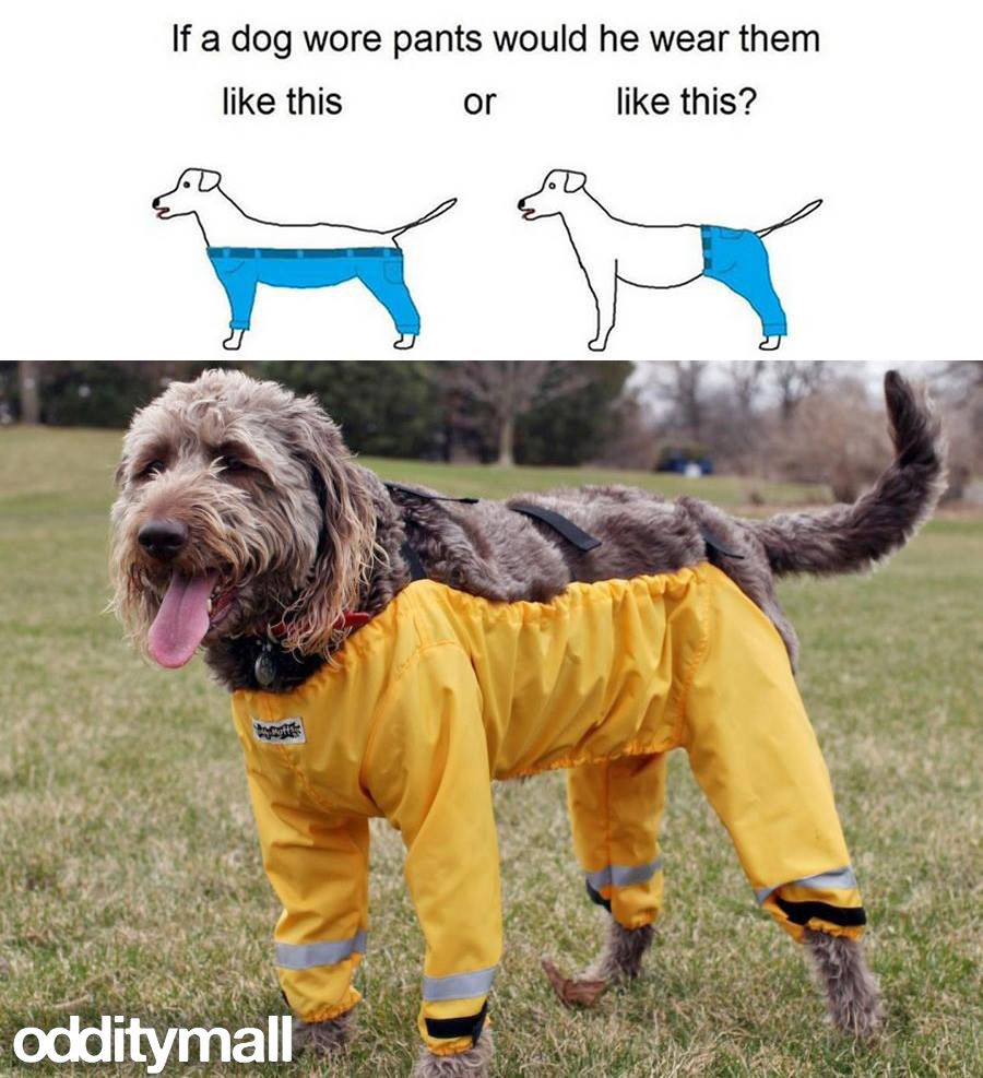 Small Of If A Dog Wore Pants