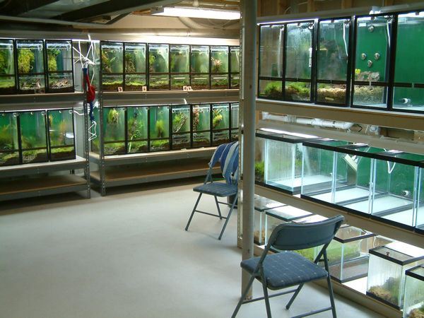 Basement Frogs And Fish W Drain System Pets Aquarium