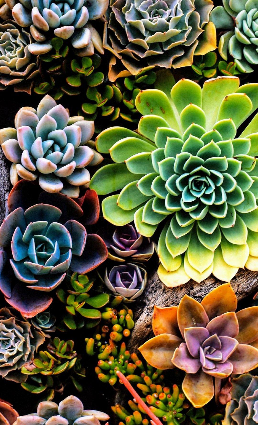 Succulents Озеленення вазонами