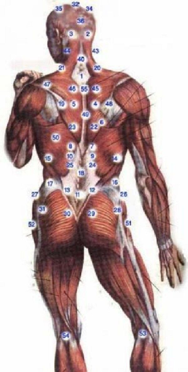 Hijama Points - Back   Hacemat   Pinterest