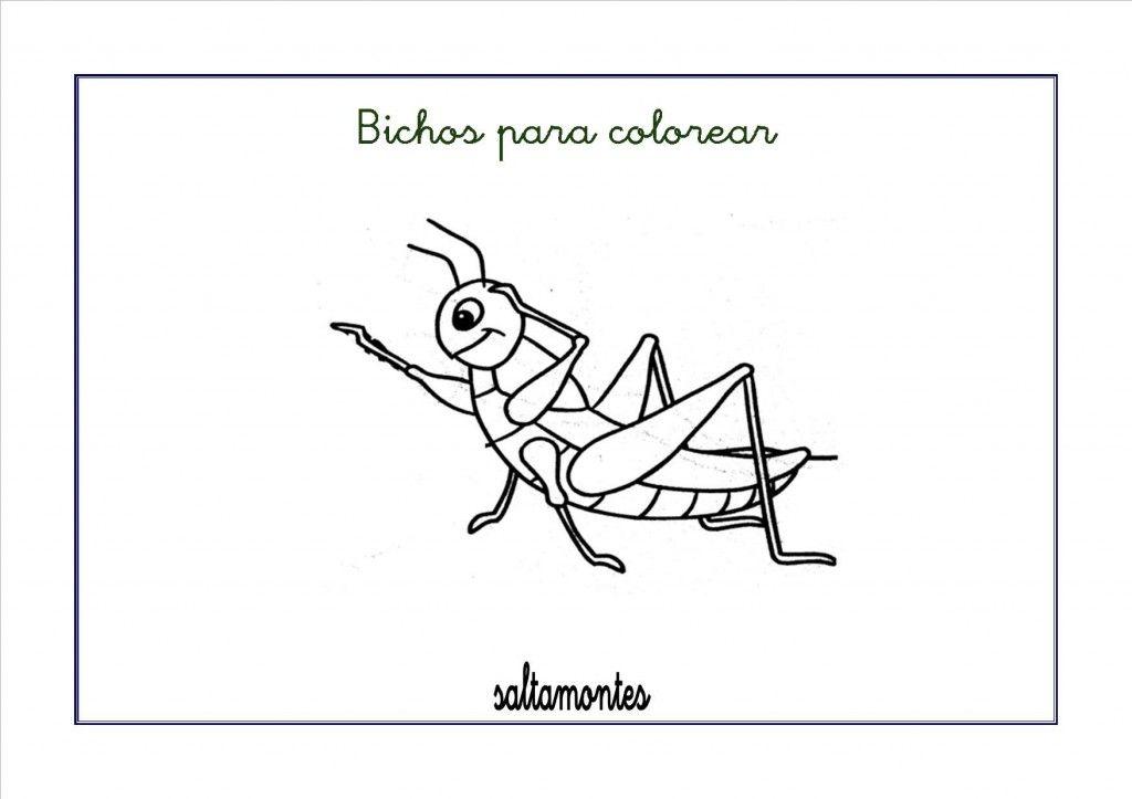 Dibujos para colorear: Bichos e insectos | activiti | Pinterest