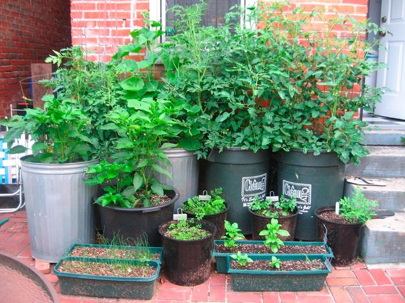 6 binations for edible container gardens