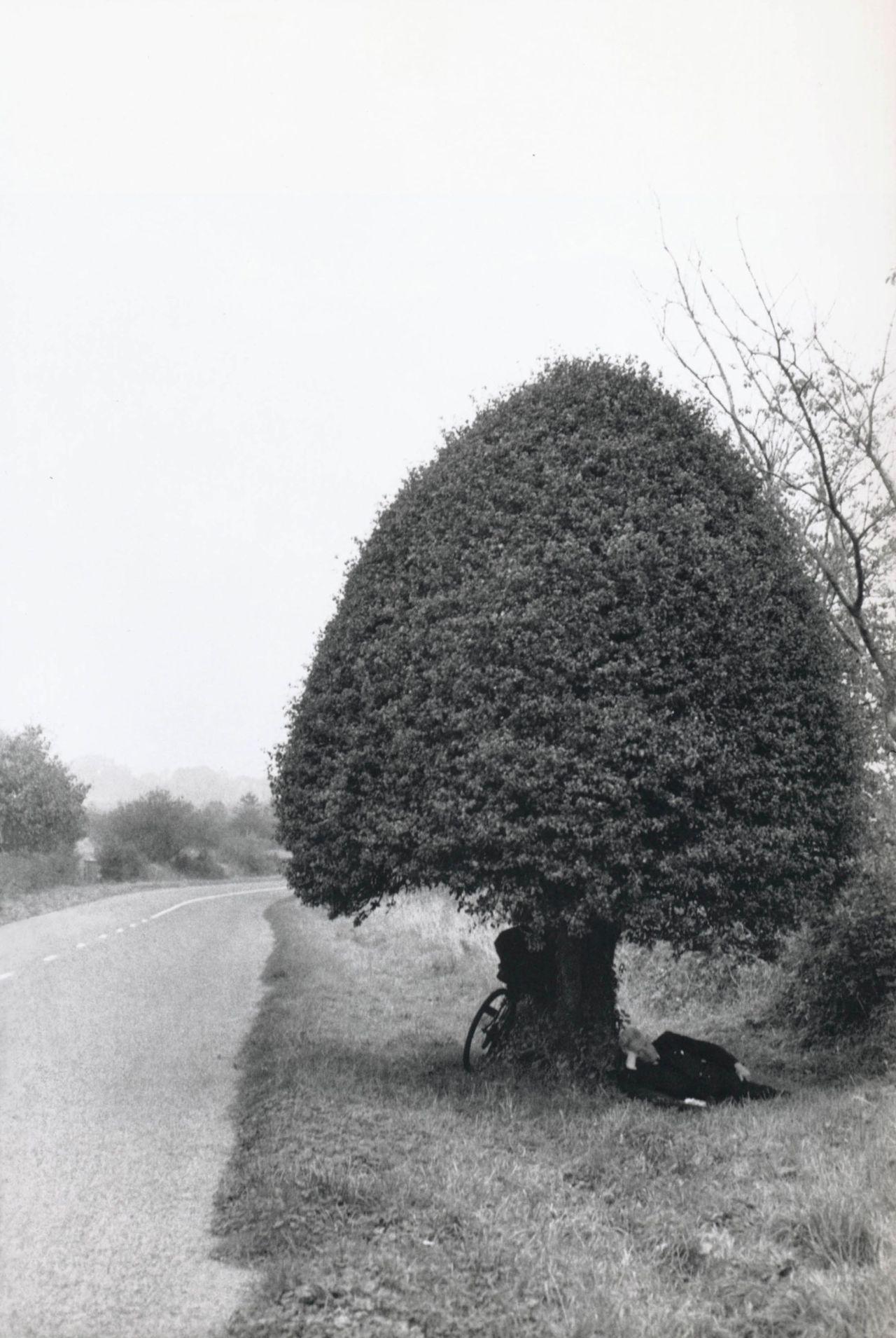 διασημότητα δέντρο dating ο Τζάστιν Μπίμπερ που χρονολογείται ποιος 2016