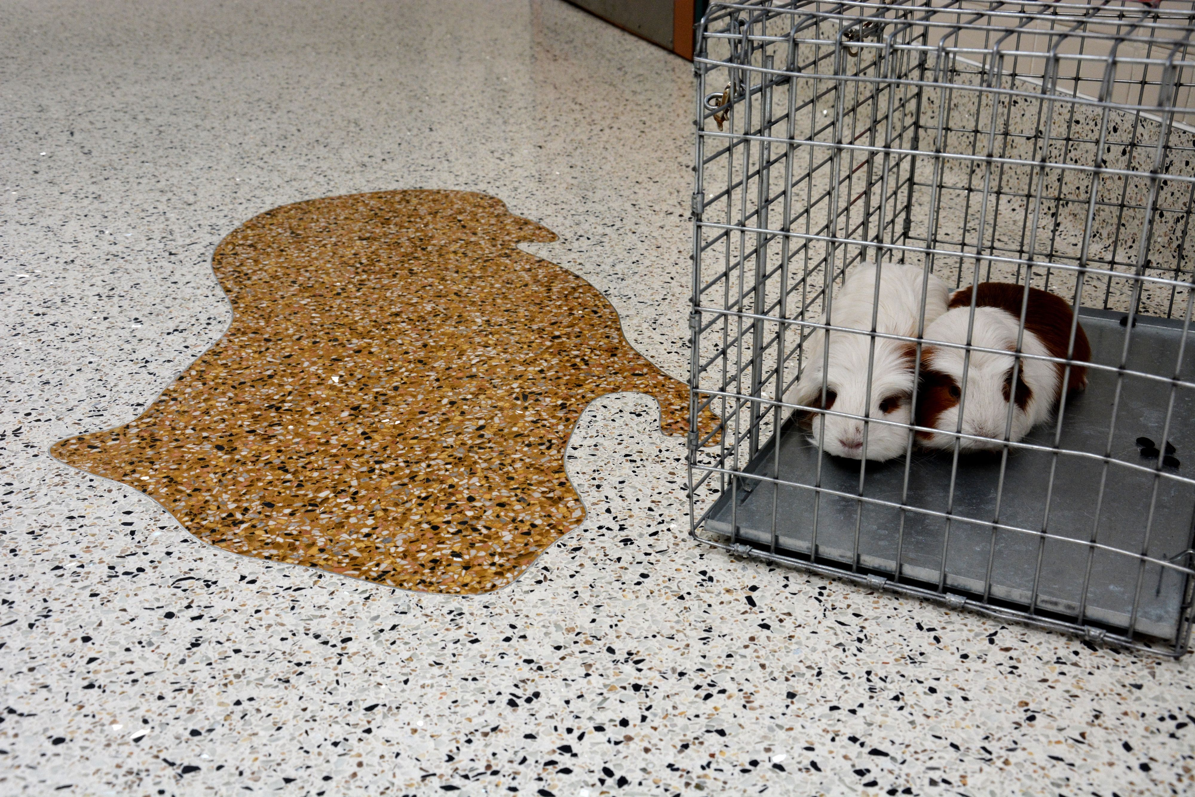 It's National Adopt a Shelter Pet Day! nationalterrazzo