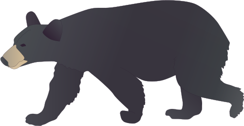 Pin By Caity Booman On Wedding Bear Art Bear Drawing Ursus