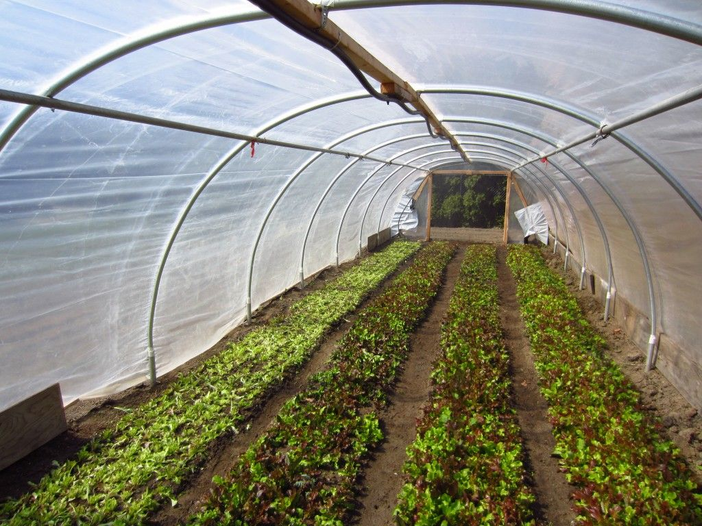 80k Year Farming On 1 3 Acre Square Foot Gardening Meets Commercial