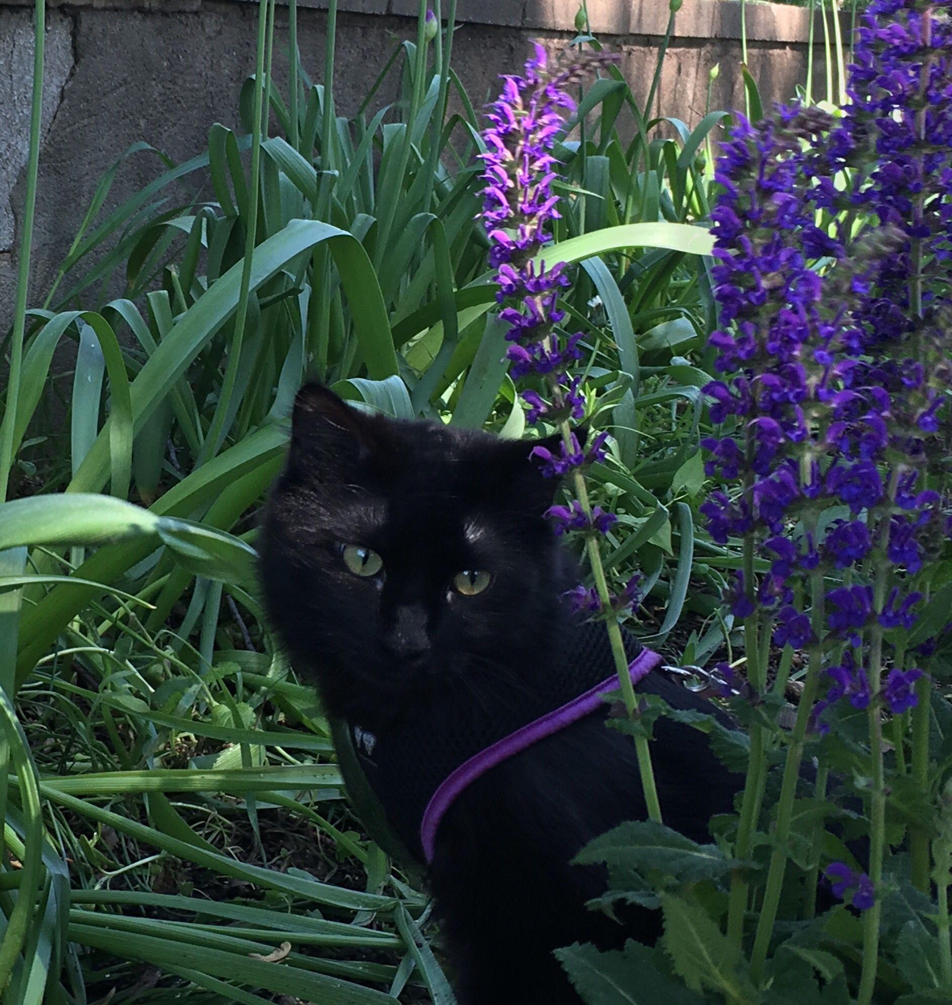 Ninja my black cat