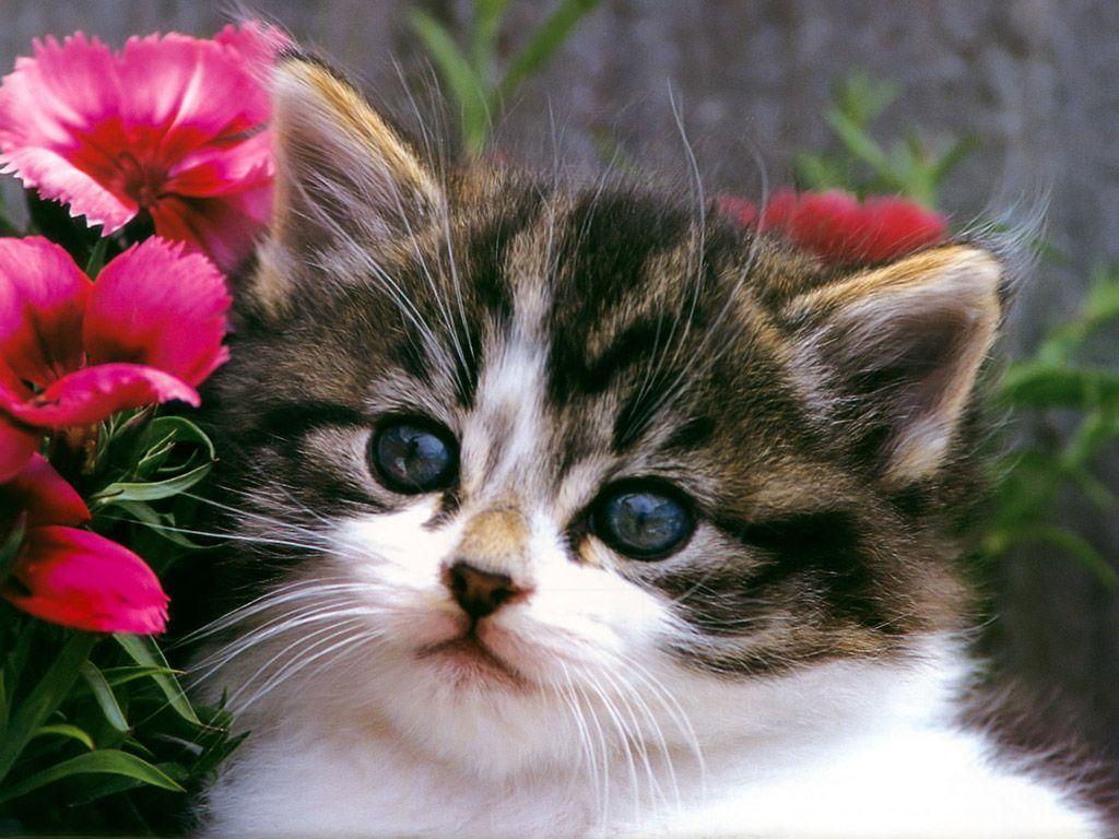 Free desktop wallpaper desktop wallpaper cat pictures pictures