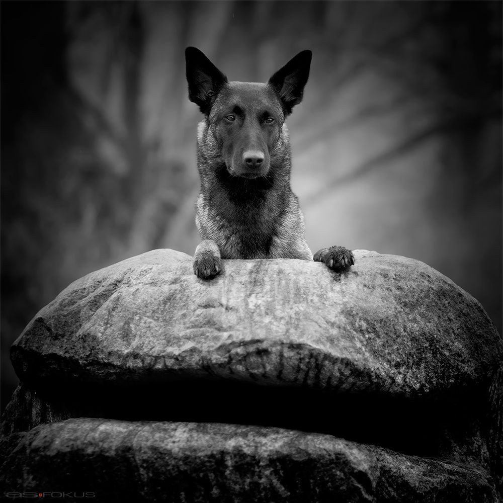 Set in stone by Andy on px dogathon Pinterest