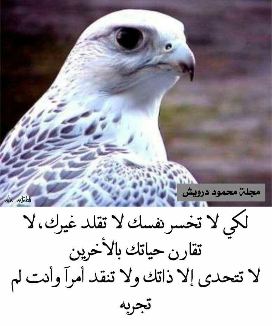 لا تتحدي الا ذاتك Animals Life Alia