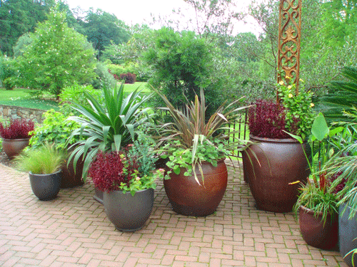 Patio potted garden gardening and plant display for Terrace plants